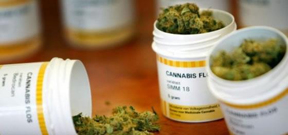 Farmacêutico catarinense desenvolve medicamento à base de cannabis