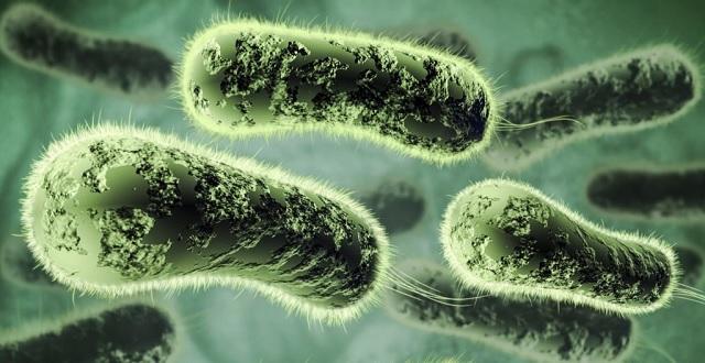 OMS publica lista de bactérias que necessitam urgentemente de novos antibióticos